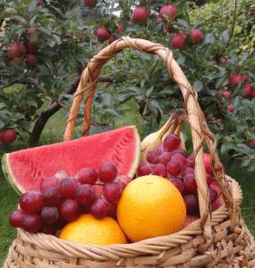 melon-oranges-grapes-apples-detox-healing-morse-nd